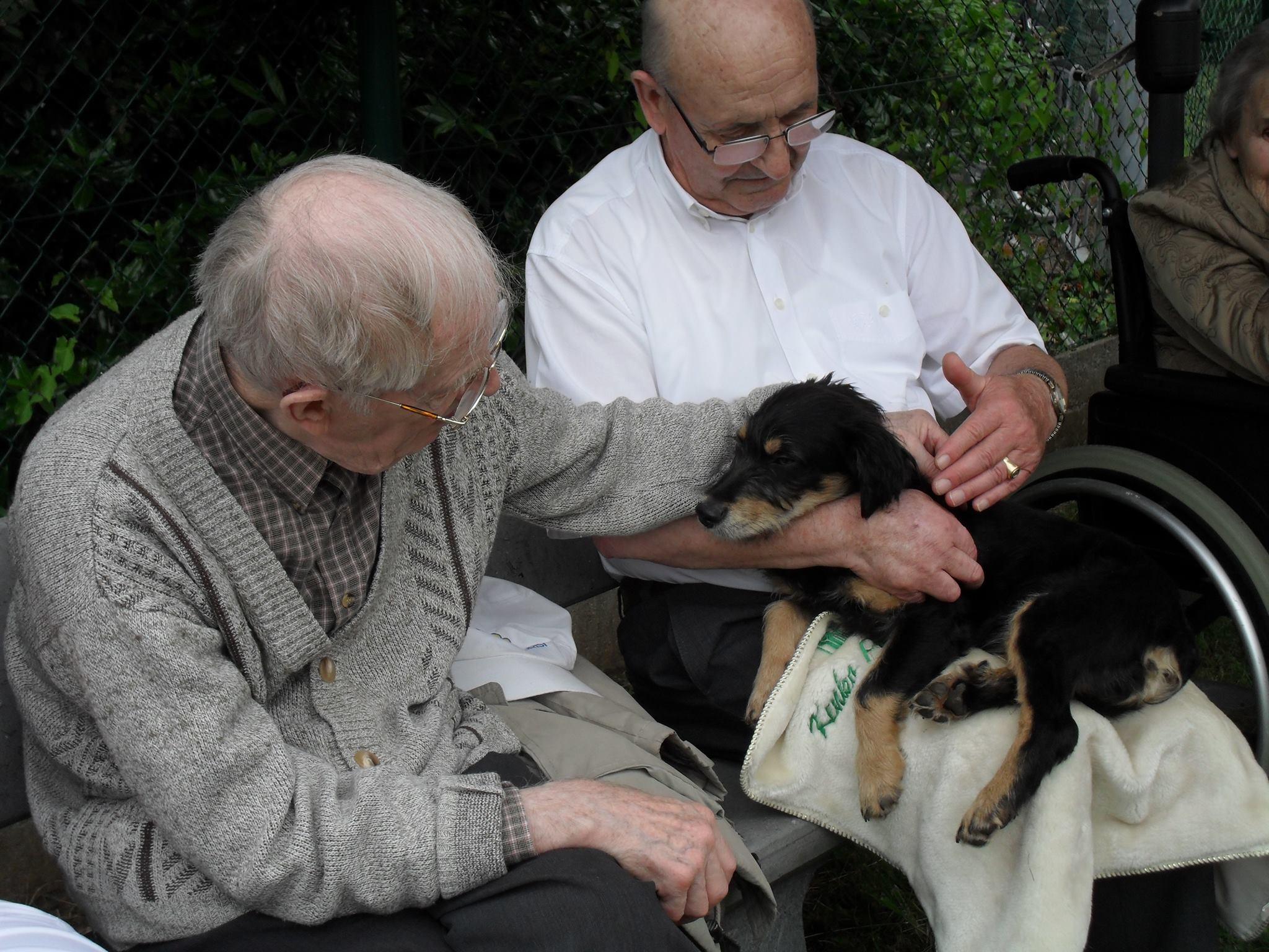 Honden Therapiedier vzw leveren fantastisch werk!