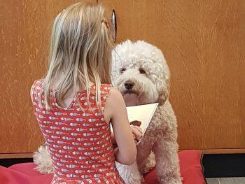 Verschil tussen een therapiedier en een assistentiehond